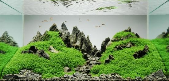 Naturaquarium im Iwagumi Stil