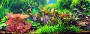 Aquarienpflanuen und Fische