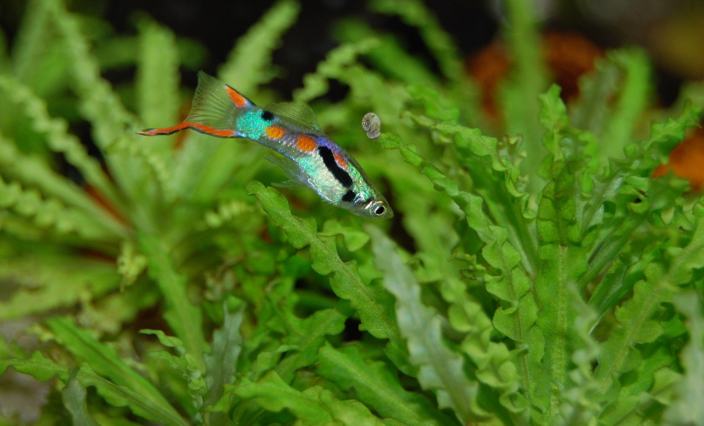 Nährstoffe für Aquarienpflanzen