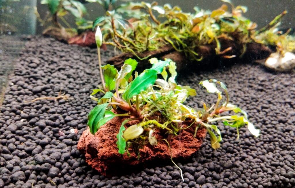 Soil als Bodengrund für anspruchsvolle Pflanzen