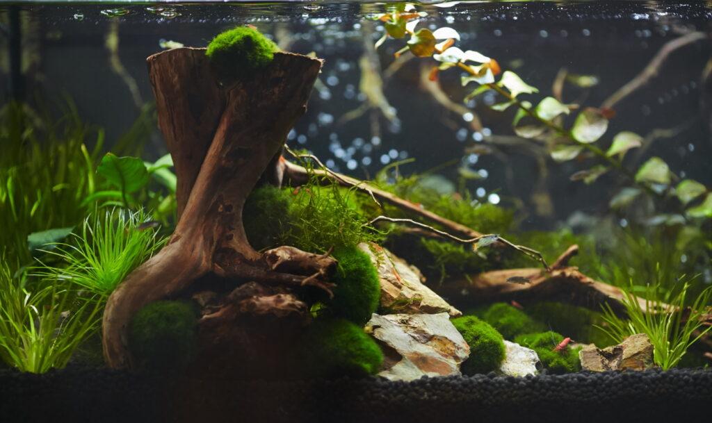 Dunkler Bodengrund im Aquarium