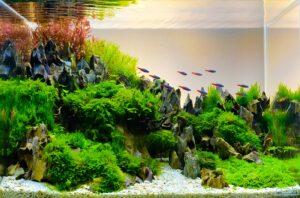 Bodengrund im Aquarium