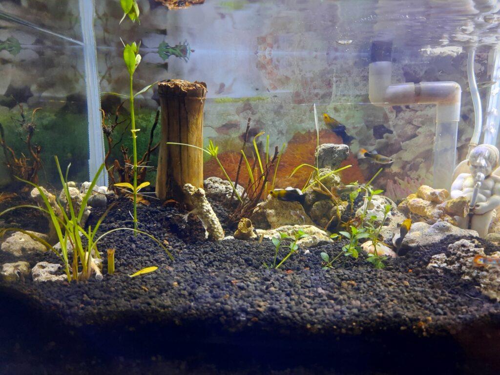 Bodengrund Höhe im Aquarium