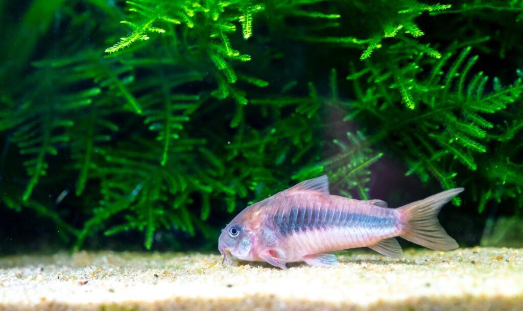 Bodengrund als Nahrungsquelle für Fische