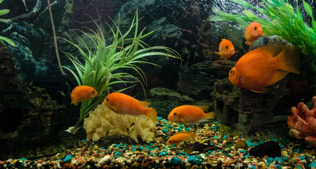 Farbkies als Aquarien Bodengrund