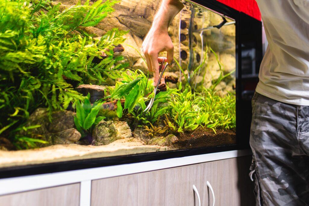 Pflanzenpflege im großen Aquarium