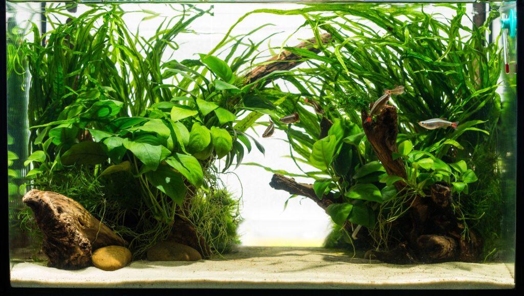 Aquariensand für Pflanzen mit feinen Wurzeln