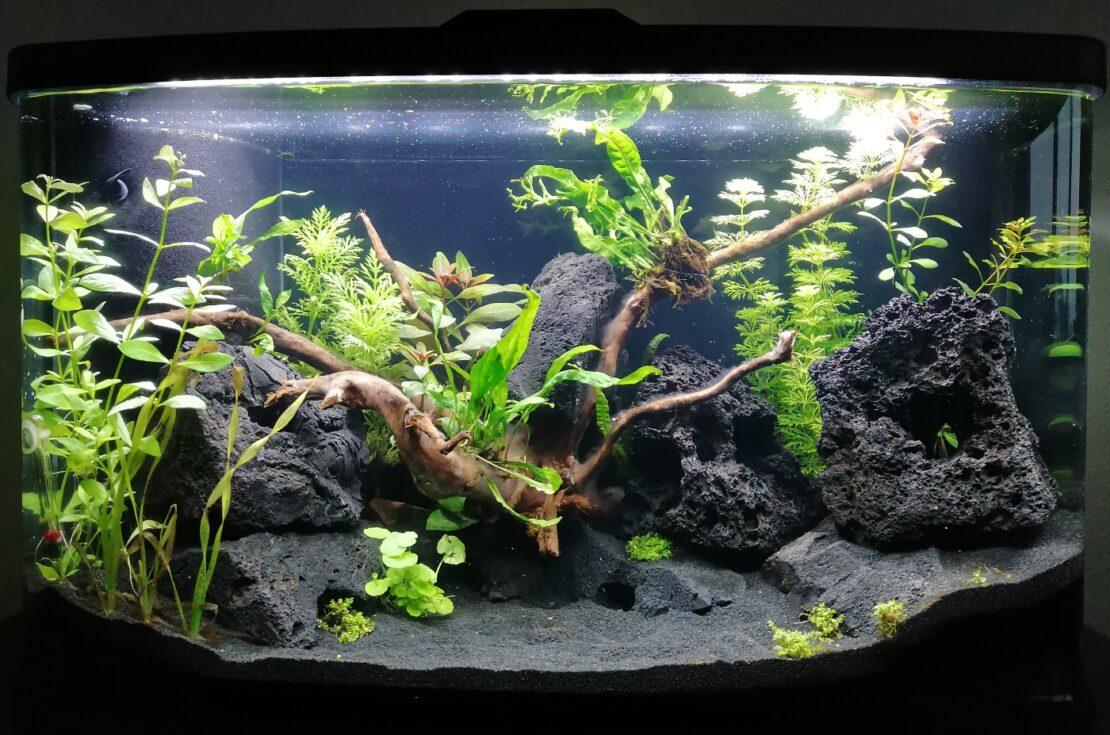 Aquarium einfahren - Was passiert genau?