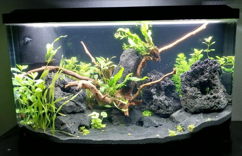 Aquarium in der Einlaufphase