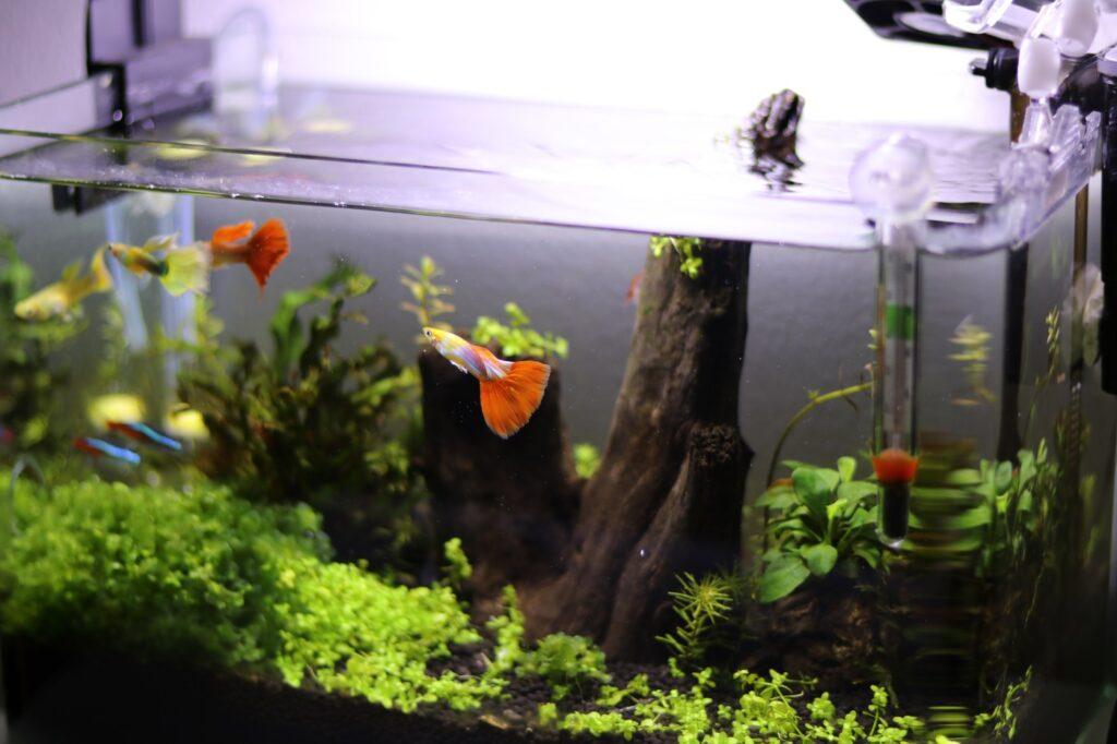 Aquarium Mindestgröße für Fische