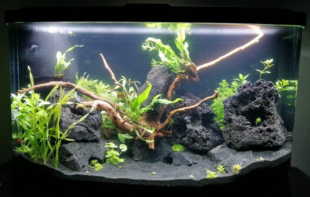 Aquarium direkt nach der Neueinrichtung