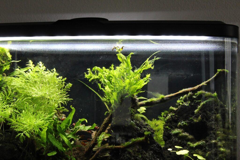 Haut an der Wasseroberfläche im Aquarium