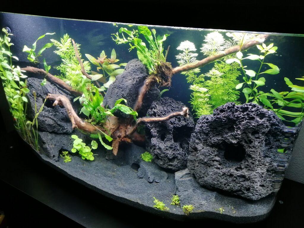 Pflanzenpflege beim Aquarium einfahren