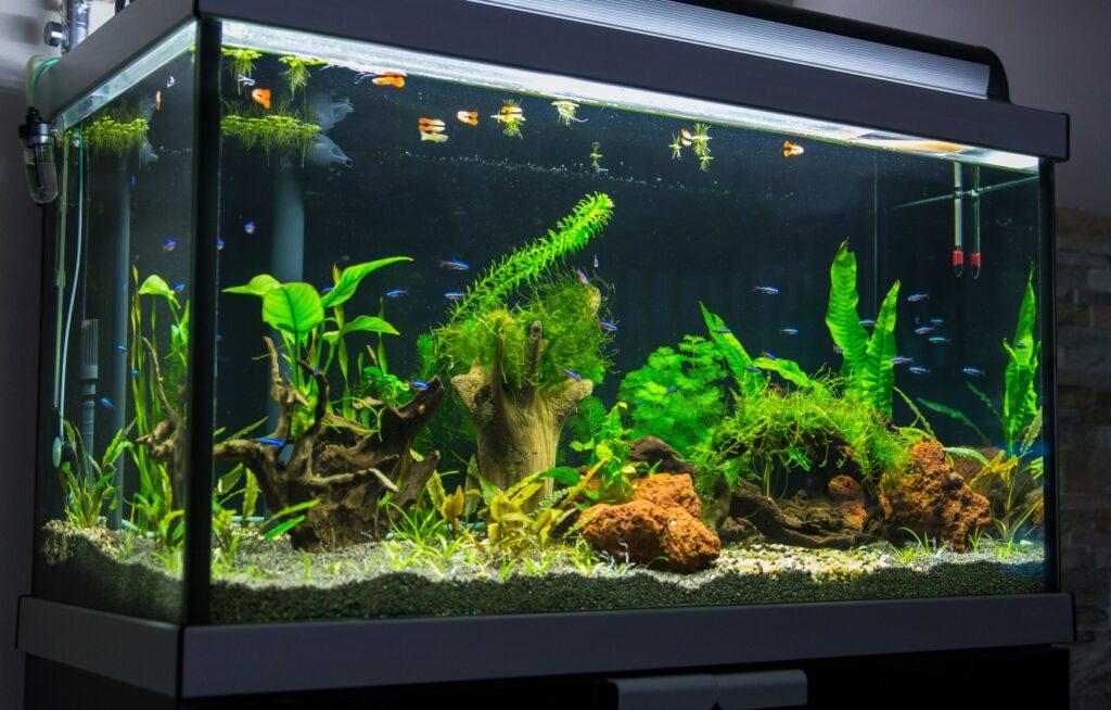 Zu viele Fische im Aquarium