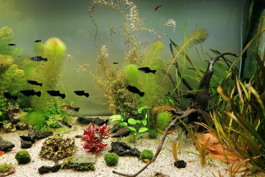 Wie viele Fische dürfen ins Aquarium