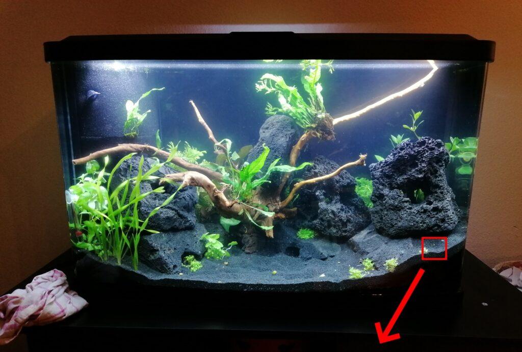 Winzige Würmer nach Ersteinrichtung des Aquariums