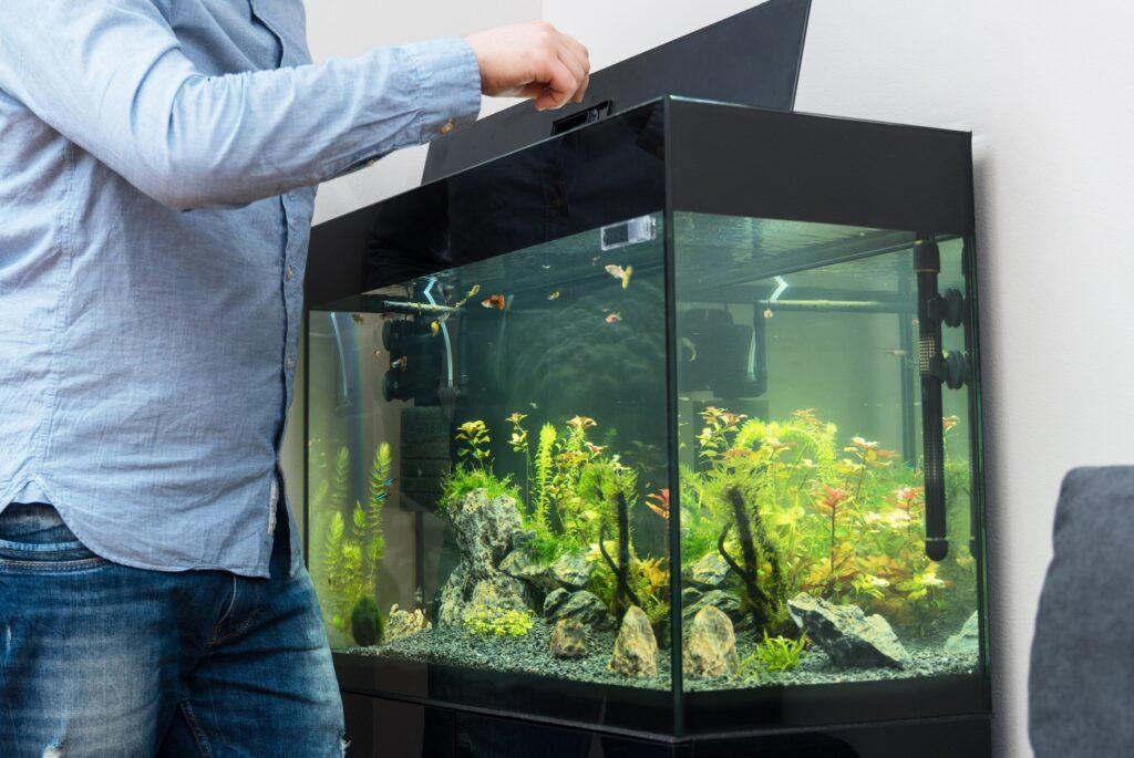 Fische füttern mit zu viel Futter - Aquarium Wasser stinkt