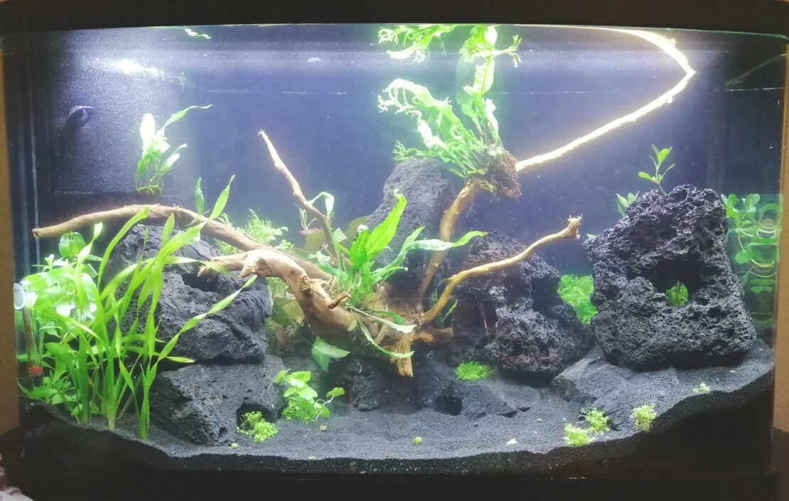 Wasser im Aquarium ist trüb