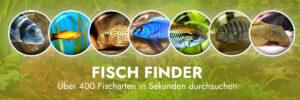 Fischarten im Aquarium finden - Fischfinder